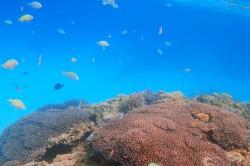 阿嘉島ニシ浜の海