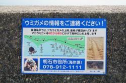 松江海岸のウミガメ看板
