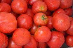 チームしんすけ農場のトマト