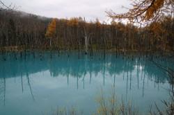美瑛白金「青い池」