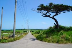小浜島 シュガーロード
