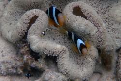 お魚サンゴ&幻の島ツアー