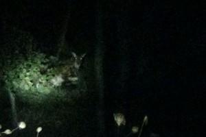 「夜の動物ウォッチング」ツアー