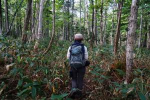 知床自然体験ツアー