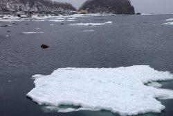 ウトロ港の流氷