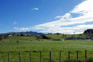 ニュージーランドの牧場風景