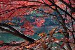 布引貯水池の紅葉