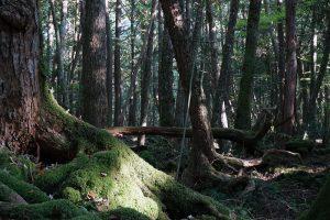 青木ヶ原樹海自然歩道